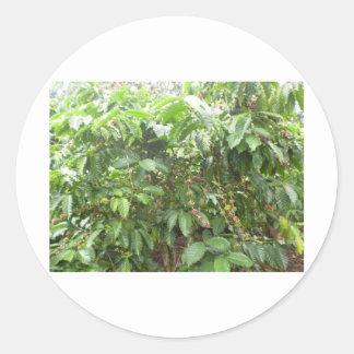 Coffea Canephora Round Sticker