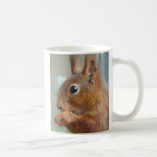 Coffee cup squirrel photo: Jean Louis Glineur