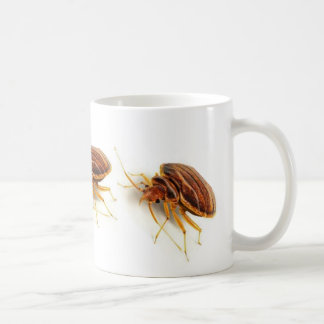 Coffee Mug - Cimex lectularius (bed bug)