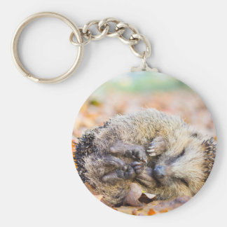 Coiled hedgehog lying on leaves in fall season keychain