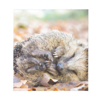 Coiled hedgehog lying on leaves in fall season notepad