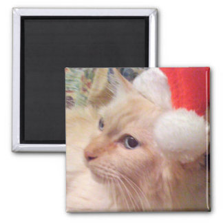 Cokie the Cat Christmas Magnet
