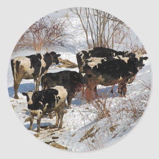 Cold Cows Sticker