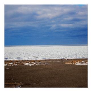 Cold Lake Landscape Poster
