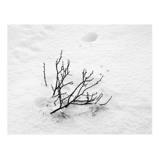 Cold Tree Postcard