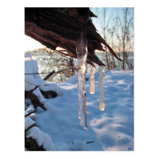 cold winter icicles after first snow storm postcard