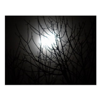 Cold winters night through the tree top postcard