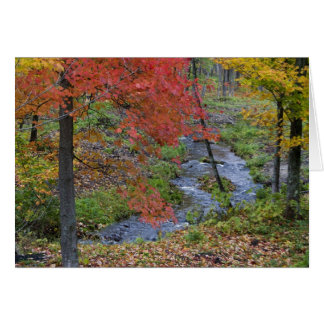 Coles Creek lined with autumn maple trees near Greeting Card