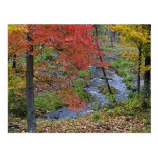 Coles Creek lined with autumn maple trees near Postcard