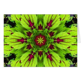 Coleus Plant Mandala Card