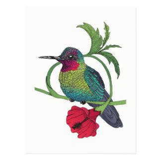 Colibri Bird Illustration Postcard