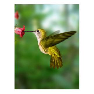 Colibri De Oro República Dominicana Postcard