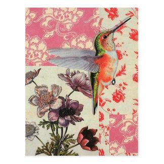 Colibri Postcard