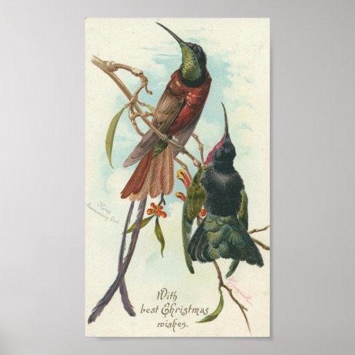 Colibris de Noël Posters