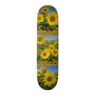 collage of sunflower in blue sky summer skatboard skate board