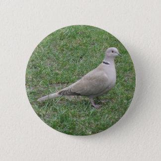 Collared Dove Button