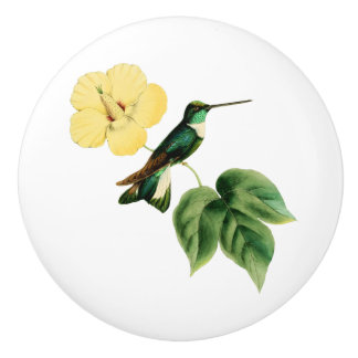Collared Inca Hummingbird Ceramic Knob
