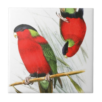 Collared Lory Tile