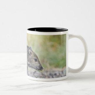 Collared peccary juvenile Two-Tone coffee mug