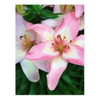 Collection des fleurs de Carole Carte Postale