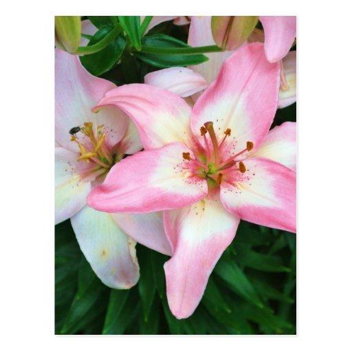 """Collection """"des fleurs de Carole"""" Carte Postale"""