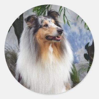 Collie dog blue merle stickers, gift idea round sticker
