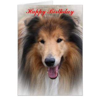 collie dog happy birthday  greeting card template