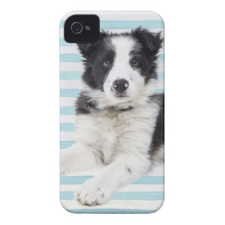 Collie Dog Pup iPhone 4 Case-Mate Cases