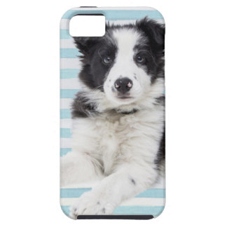 Collie Dog Pup iPhone 5 Case