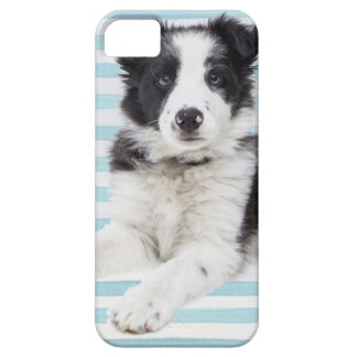 Collie Dog Pup iPhone 5 Cover