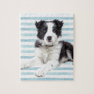 Collie Dog Pup Jigsaw Puzzle