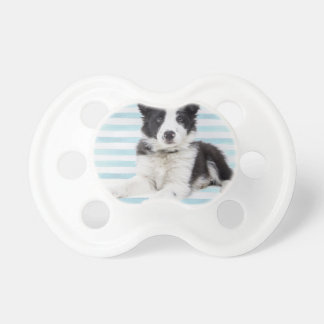 Collie Dog Pup Pacifier
