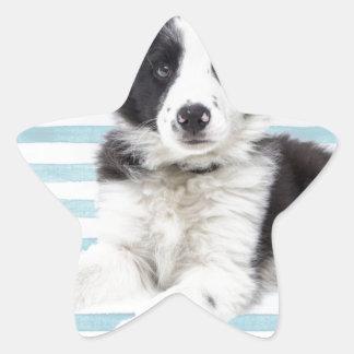 Collie Dog Pup Star Sticker