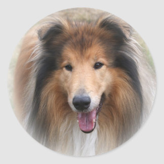 Collie dog stickers