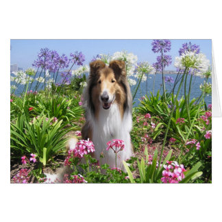 Collie in Flowers Card