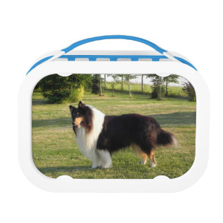 Collie Lunch Box