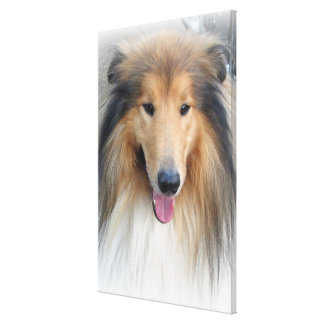 Collie portrait canvas print