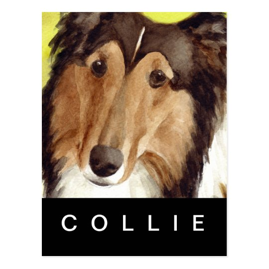 Collie Postcard