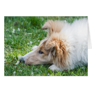 Collie puppy dog, cute rough collie sad face blank card