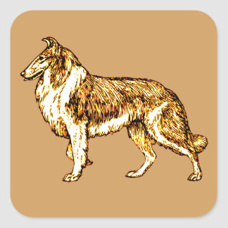 Collie Square Sticker