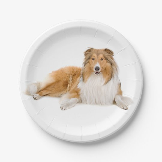 Collie Tan &  White Puppy Dog 7 Inch Paper Plate