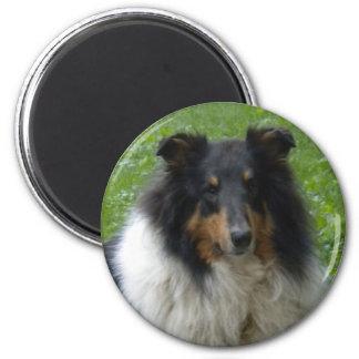 Collie -Tri -Magnet 2 Inch Round Magnet