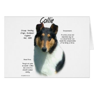 Collie (tri smooth) History Design Cards