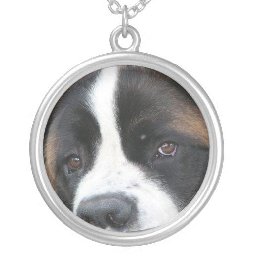 Collier de chien de St Bernard