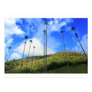 Colombian wax palm trees in the Cocora Valley Postcard