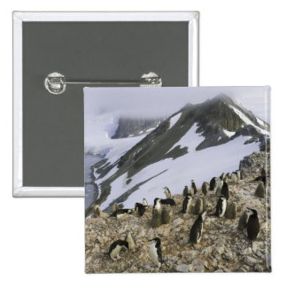 Colony of Chinstrap penguins Pins