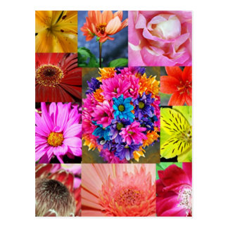 Color Display of flowers Postcard