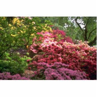 Color Fall Photo Cutouts