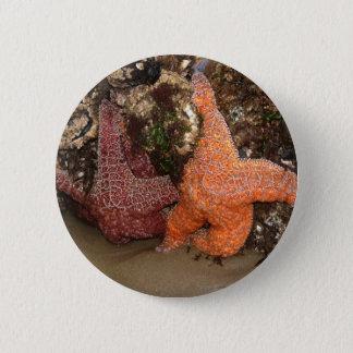 Color Photo 3 Starfish/Sea Star Photo in Oregon 2 Inch Round Button