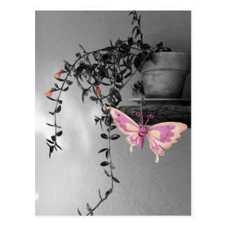 Color Splash Butterfly Still Life Photograph Postcard